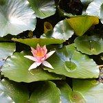 Bild från UC Botanical Garden at Berkeley