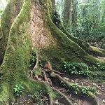 Billede af Reserva Bosque Nuboso Santa Elena