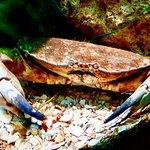 SeaQuarium Rhylの写真
