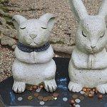 因幡のウサギ伝説?