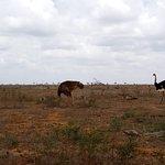 A recent safari by Jodam Magical Safaris. View more of these at www.jodamsafaris.com
