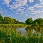 Teich an Grün 8