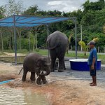 Фотография Elephant Jungle Sanctuary Phuket