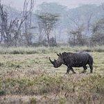 Lac Nakuru Rhino