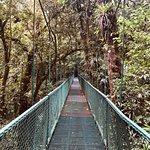 Selvatura-Park Foto