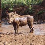 Tiger Hunters Tours & Safaris - Day Adventures Photo
