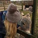 Photo de The Donkey Sanctuary