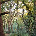 Foto de Epping Forest
