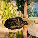 Cat'n'Coffee fényképe