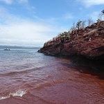 Snorkeling around the red beach