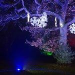 Foto van RHS Garden Harlow Carr