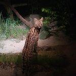 Night Safari Foto