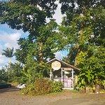 Photo of Coconut Glen's