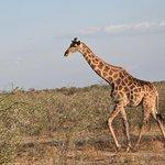 Foto de Wild Dog Safaris