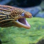Cairns Aquarium Foto