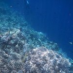 Corals during snorkelling