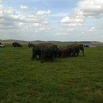 Udawala Wild Life Safari
