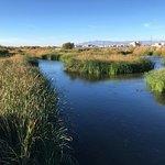 Foto de Clark County Wetlands Park