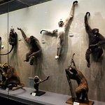 Foto di Tianjin Natural History Museum
