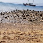 Photo de Dolphin Excursions Djibouti
