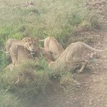 Bundu Tours & Safaris fényképe