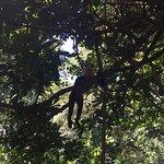 Foto di The Congo Trail Canopy Tour