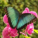 Foto Butterfly Park of Benalmadena