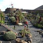 Guatiza - Jardín de Cactus - Lower Garden Area