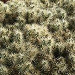 Guatiza - Jardín de Cactus