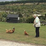 """The """"over friendly"""" chickens!"""
