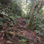 Photo of Cameron Highlands Trail No. 10