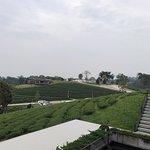 Choui Fong Tea Plantation صورة فوتوغرافية