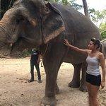 Elephant Retirement Park Phuket Foto