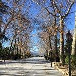 Alameda Del Tajo Foto