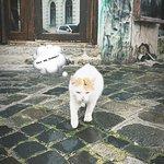 Photo de Kaja Tanya
