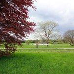 Фотография Botanical Gardens Flora