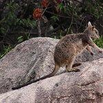 Bild från Magnetic Island National Park