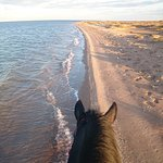 Black Beauty Gallop by the Red Sea.