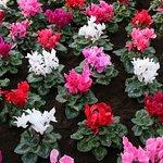 Duthie Park Winter Gardens照片