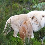 Photo of Tenikwa Wildlife Awareness Centre