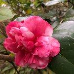 Billede af Magnolia Plantation & Gardens