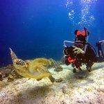 Photo of Alona Divers