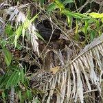 صورة فوتوغرافية لـ Solar Whisper Daintree River Wildlife Cruises