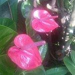 Foto van Abraham's Spice Garden