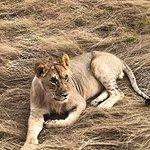 Zdjęcie Beacon Safaris