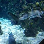 バルセロナ水族館の写真