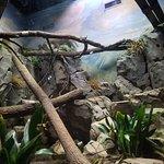 Photo de Greensboro Science Center