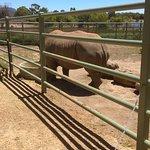 Halls Gap Zoo-bild
