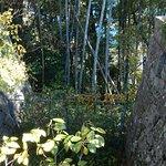 Foto Puing Istana Shingu