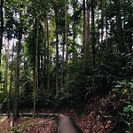 FRIM -Forest Research Institute of Malaysia-bild